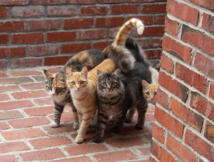 Image of four cats on bricks