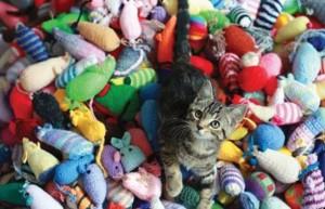 Craft Cat