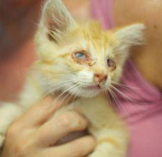Bad eyes orange colony kitten