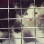 Kitten on Video